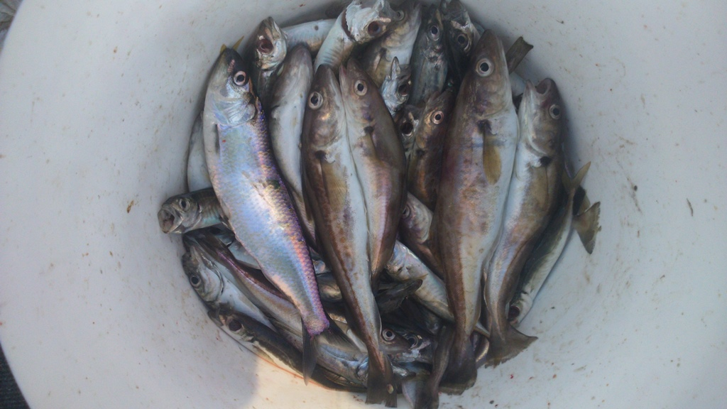 Разнообразная рыбалка