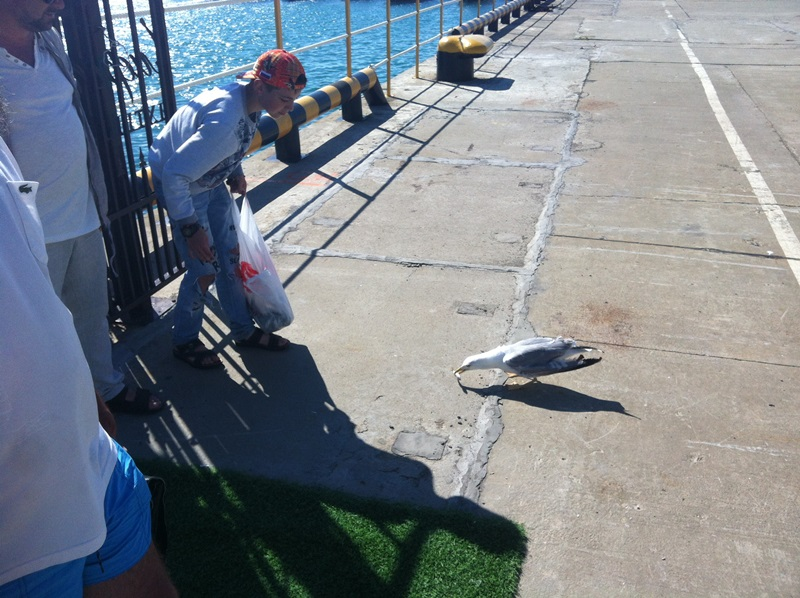 Тоже адлерский рыбак