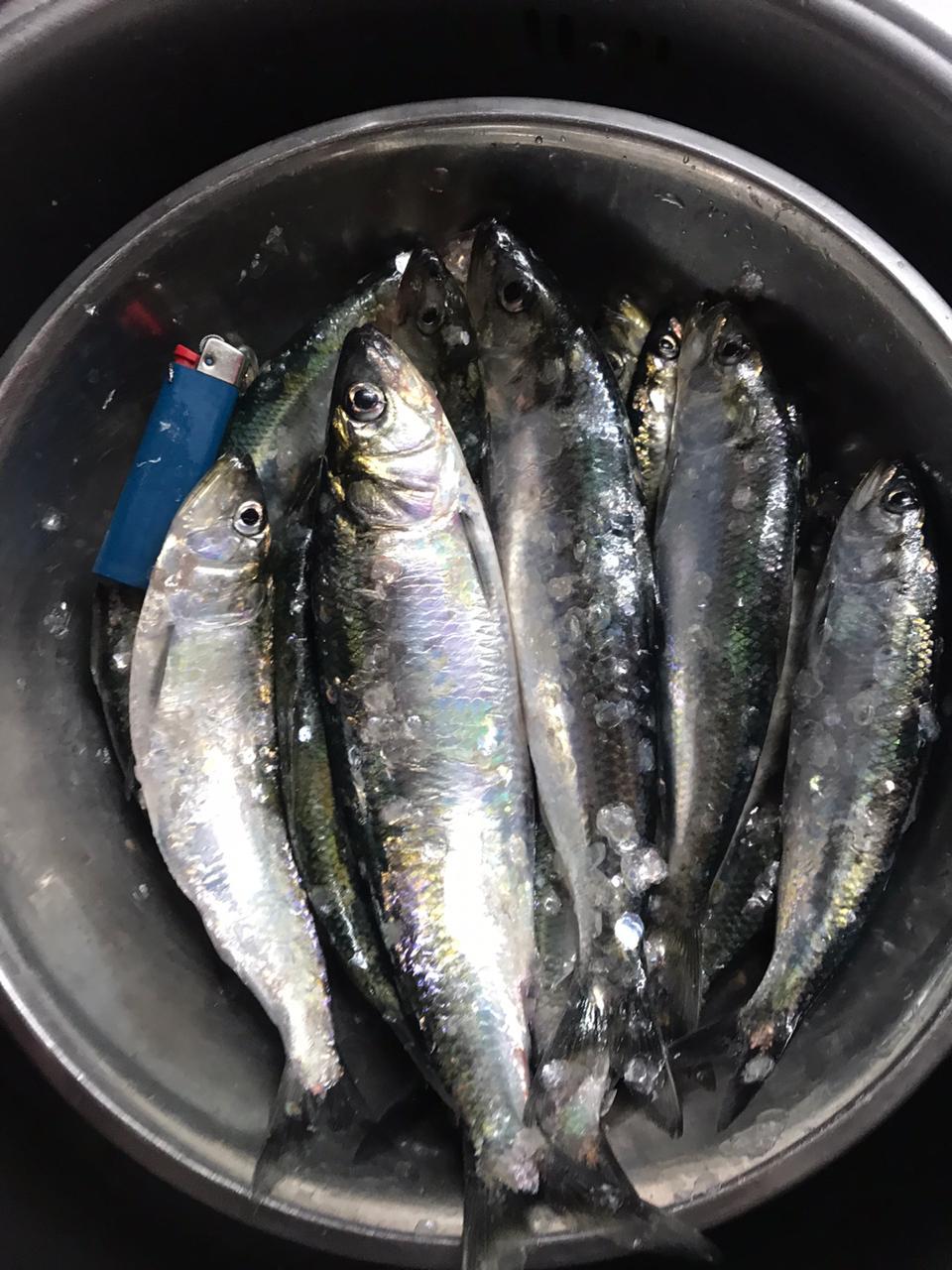 Рыба дня.